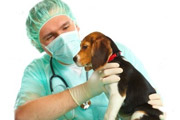 Cesárea de gata o perra en Madrid
