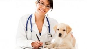 Contacto con cirujano veterinario