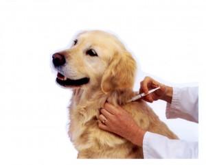 Cirugía oncologíca y tumoral veterinaria