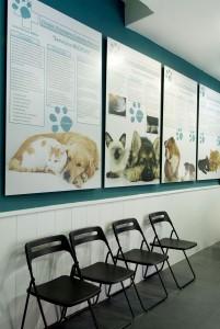 Cirugía reconstructiva veterinaria