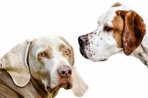 Cirugía maxilofacial de perros y gatos